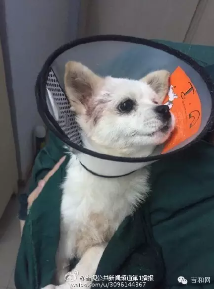 Cặp đôi Trung Quốc chặt chân chó cưng rồi đăng lên mạng xã hội khiến hàng triệu người bức xúc