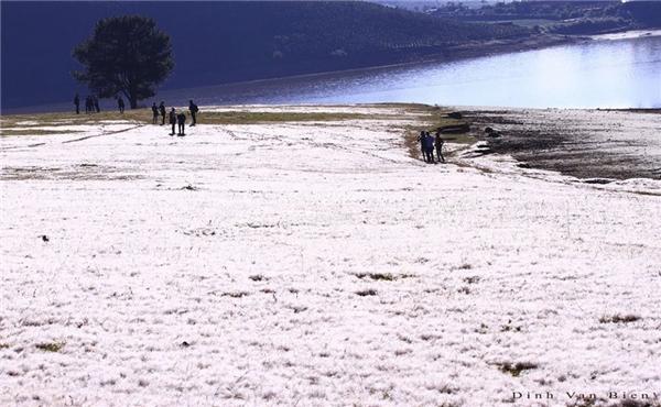 Giới trẻ phát cuồng với cánh đồng tuyết siêu lãng mạn ở Đà Lạt