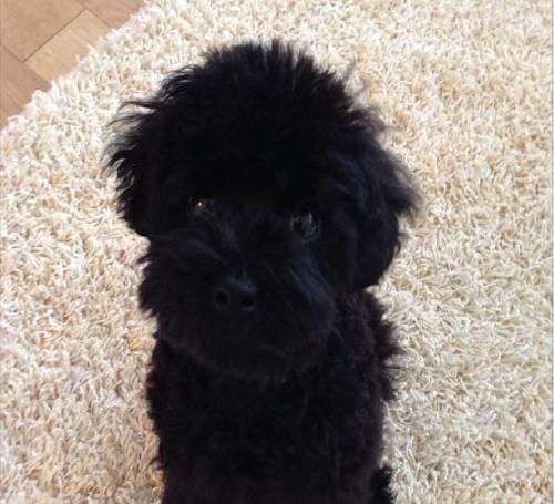 Taeyeon được xem là người khởi xướng phong trào nuôi thú cưng của các thành viên SNSD. Hầu hết các fan đều quá quen với những hình ảnh đáng yêu của nữ thần tượng cùng chú cún tên Ginger (Gừng). Điểm đặc biệt ở chú chó này chính là màu lông đen tuyền, đến nay, mọi người vẫn thường xuyên gặp khó khăn trong việc phân biệt đầu và đuôi của Ginger.
