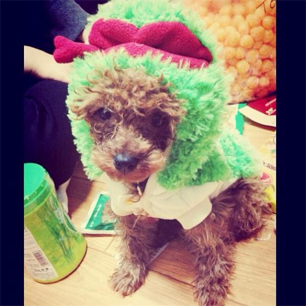 """Không hổ danh là một tín đồ thời trang cá tính, cả chú cún Kkomde của Key trông cũng vô cùng thời thượng. Khomde từng khiến cộng đồng fan SHINee điên đảo khi xuất hiện trong chương trình thực tế về thời trang của nhóm với vẻ ngoài đáng yêu """"lạc lối""""."""