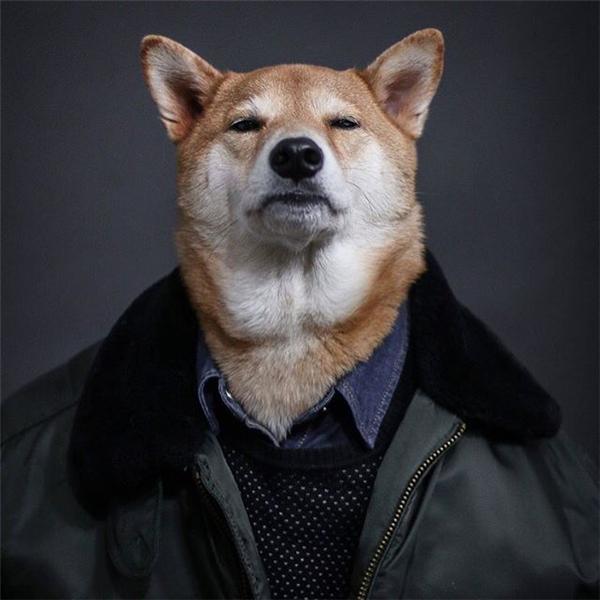 Gặp gỡ những siêu sao quá sức đáng yêu của thế giới loài chó
