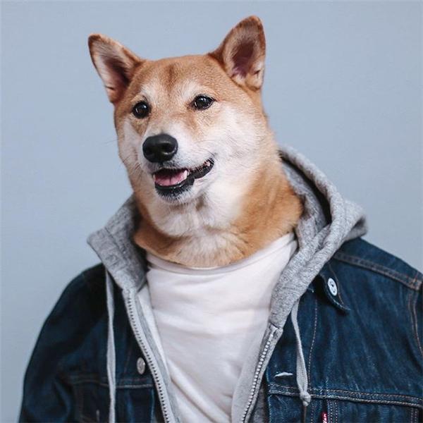 Boldhi là ngôi sao thời trang của thế giới loài chó. (Ảnh: Internet)