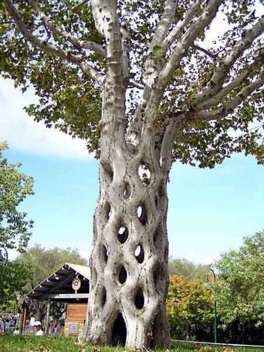 Theo bạn nghĩ thì đây là một cây hay sự kết hợp của nhiều cây lại với nhau? (Ảnh: Internet)