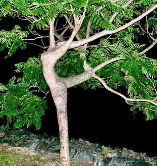 ...hay vũ công ba-lê đây nhỉ? (Ảnh: Internet)