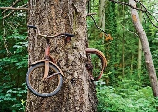"""Hình như có ai nhờ cây """"giữ"""" chiếc xe đạp nhưng không đến lấy! (Ảnh: Internet)"""
