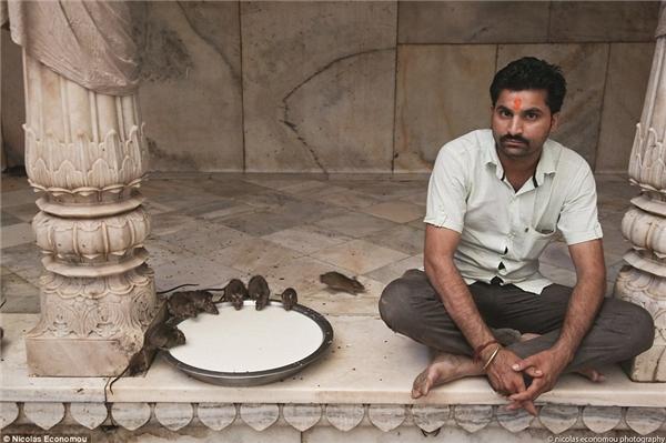 Tận mắt chứng kiến vườn thú chuột với hơn 20.000 con chuột lúc nhúc