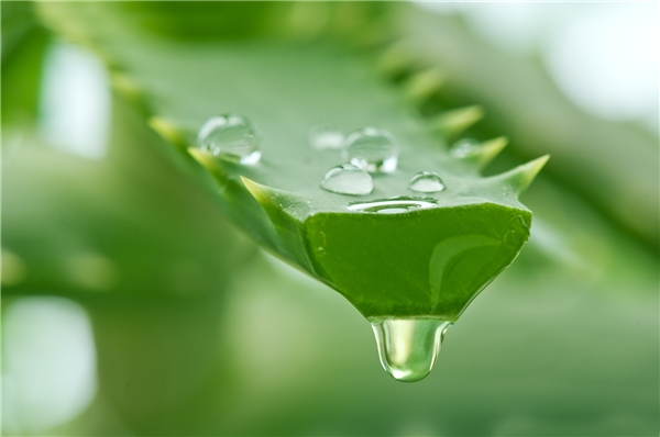 Tự chế kem trị sẹo thâm cực hiệu quả từ nguyên liệu thiên nhiên