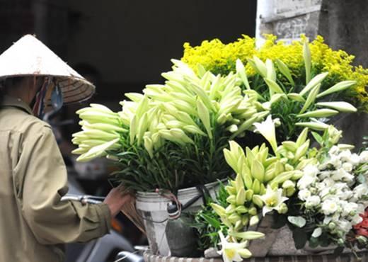 Hà Nội tháng 4 gọi mùa hoa loa kèn. (Ảnh: Internet)