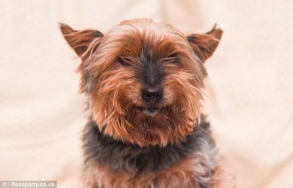 Chú chó này tuy không còn nhanh nhẹn hoạt bát nữa nhưng vẫn luôn tỏ ra thân thiện, vui vẻ.
