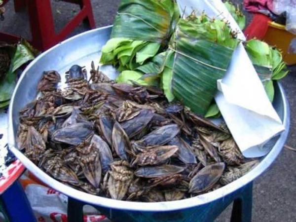 Bọ nước khổng lồ là một món đặc sản ở Thái Lan. (Ảnh: Internet)