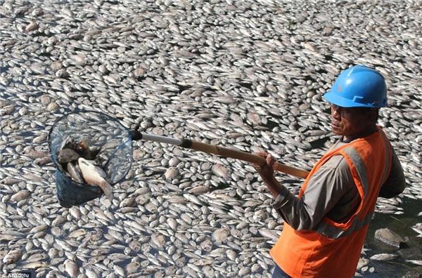 Hàng trăm tấn cá chết bất thường, người dân vô cùng hoang mang