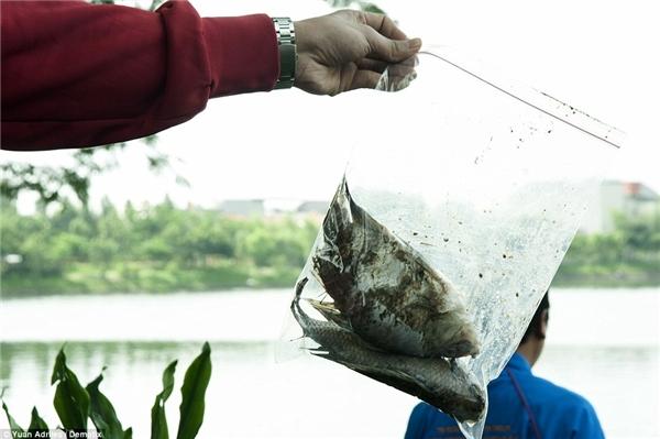 Một mẫu cá chết được đóng gói đem đi xét nghiệm. Ảnh: Internet
