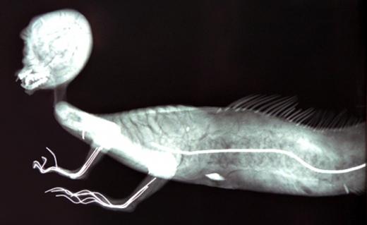 Bí ẩn về sự tồn tại của Nàng tiên cá trong lòng đại dương