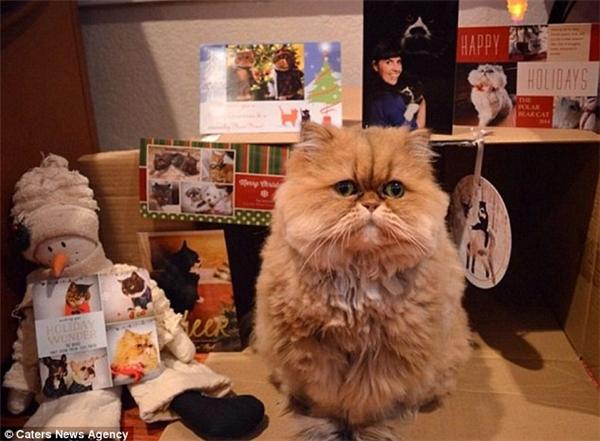 """Chú mèo Buttercup lúc nào cũng có biểu cảm gương mặt giống như """"thất tình"""". (Ảnh: Internet)"""