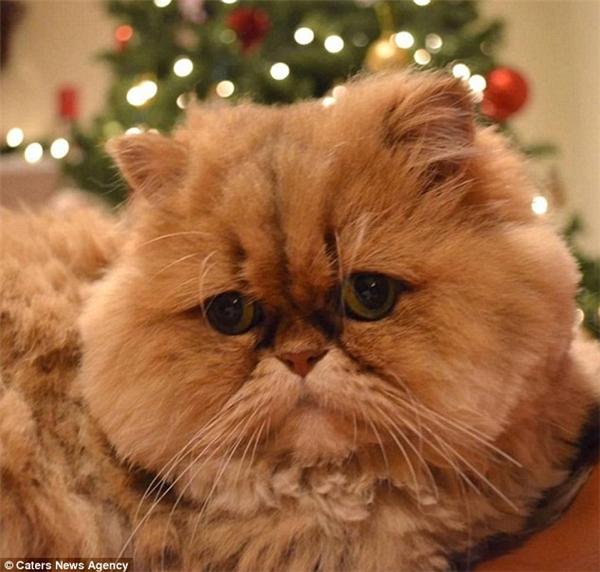 Sững sờ với biểu cảm của chú mèo có bộ mặt thất tình