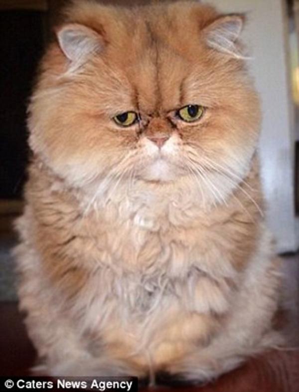 Nét buồn luôn hiện diện trên gương mặt của Buttercup. (Ảnh: Internet)