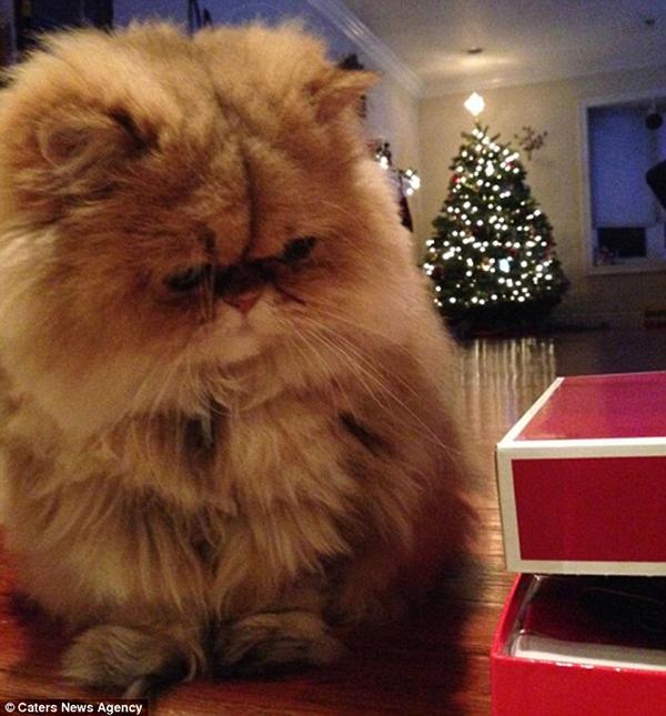 Buttercup buồn hơn khi Giáng sinh đến. (Ảnh: Internet)