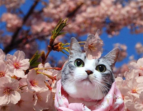 """""""Hi vọng núp giữa đống hoa này có thể chebớt cái mặt bánh bao của mình..."""".(Ảnh: Internet)"""