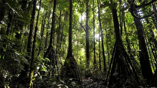 Những cái cây có rễ dài có thể dịch chuyển.