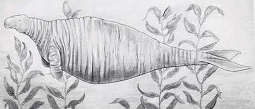 Có kích thước lớn nhưng bò biển Steller rất hiền lành. (Ảnh: Oddee)