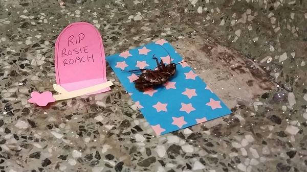 Con gián Rosie được xây bia mộ và hỏa thiêu sau khi chết trong khuôn viên trường Đại học A&M.