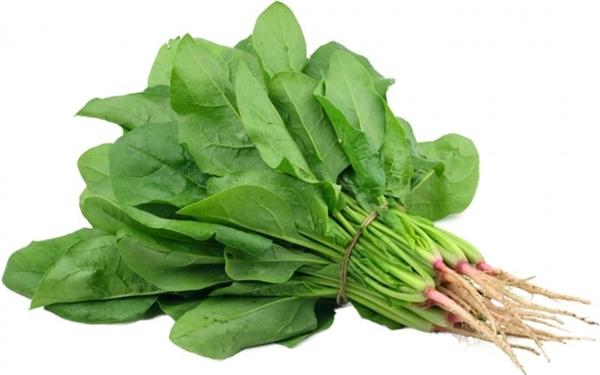 Nitrat trong cần tây và rau chân vịt sẽ chuyển hóa thành nitrit gây ung thư nếu được hâm nóng nhiều lần. (Ảnh: Internet)