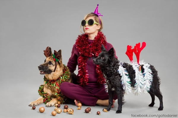 Cát-xê cho buổi chụp hình đặc biệt chính là một bữa tiệc Giáng sinh thịnh soạn cho các chú cún.