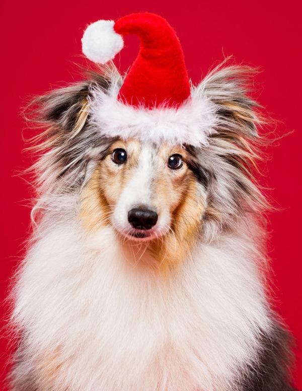Bộ ảnh thú vị là món quà Noel mà chàng nhiếp ảnh gia dành tặng cho các khán giả đã theo dõi và ủng hộ anh trong thời gian qua.