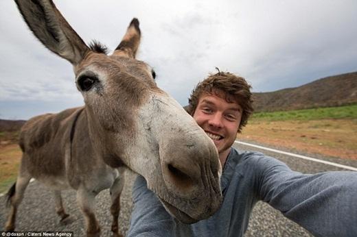 Bức ảnh tự sướng đầu tiên của Allan cùng động vật là với chú chó của mình vào năm 2010, nhưng đến khi anh chàng chụp hình cùng với chú lạc đà con ở nước Úc vào năm 2013, bạn bè của Allan mới tỏ ra thích thú.(Ảnh: Internet)