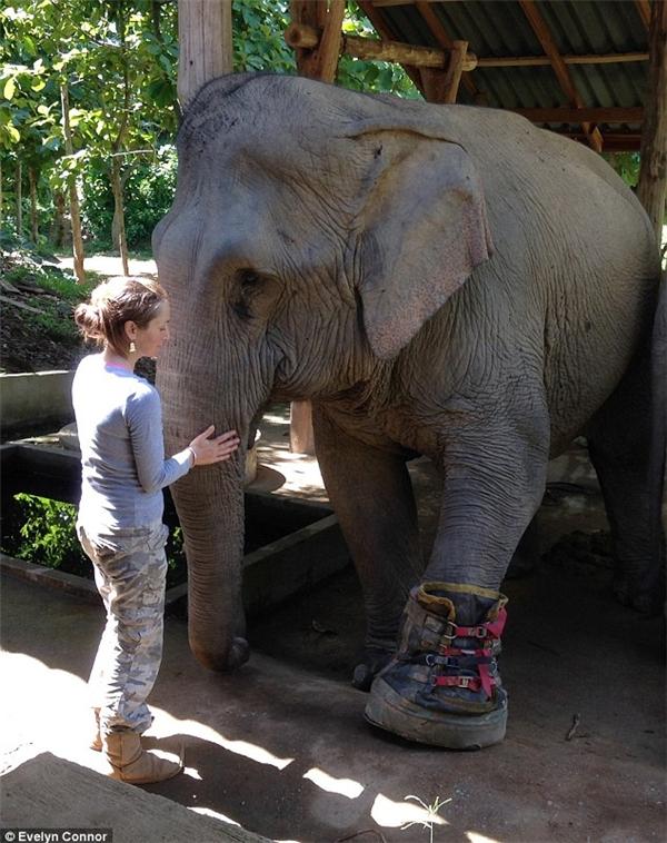 Wasana là con voi thứ 8 được tổ chức cứu sống. (Ảnh: Evelyn Connor)