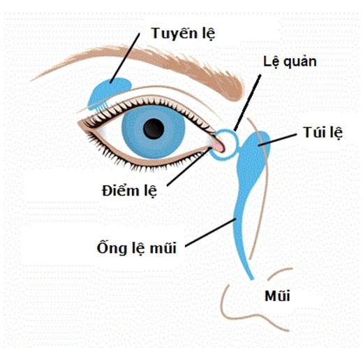 Nước mắt thực chất không đến từ mắt mà đến từ tuyến lệ nằm cạnh hốc mắt. (Ảnh: Internet)
