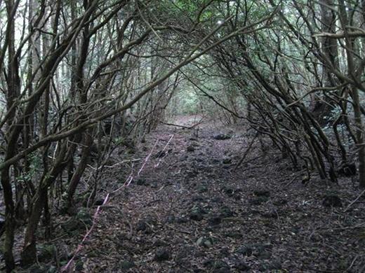 Rợn tóc gáy với khu rừng ai đi qua cũng đều tự sát