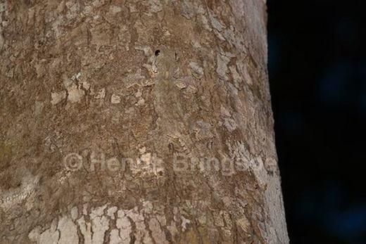 Thạch sùng cũng là một trong những loài có khả năng ngụy trang độc đáo. (Ảnh: Internet)