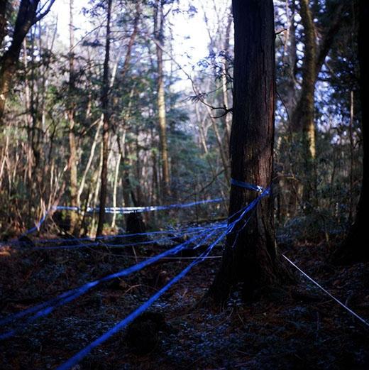 Những sợi dây được chăng ra để đánh dấu các lối đã được truy soát. (Ảnh: Rob Gilhooly)