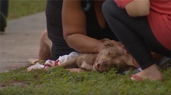 Thương xót chú chó hi sinh mạng sống để bảo vệ chủ nhân