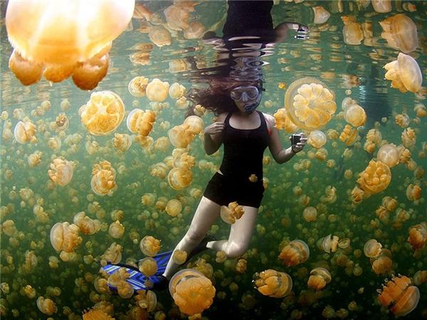 Lạc vào thế giới những chú sứa.