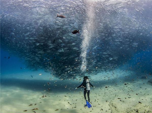 """""""Lốc xoáycá"""" dưới lòng đại dương Cabo Pulmo."""