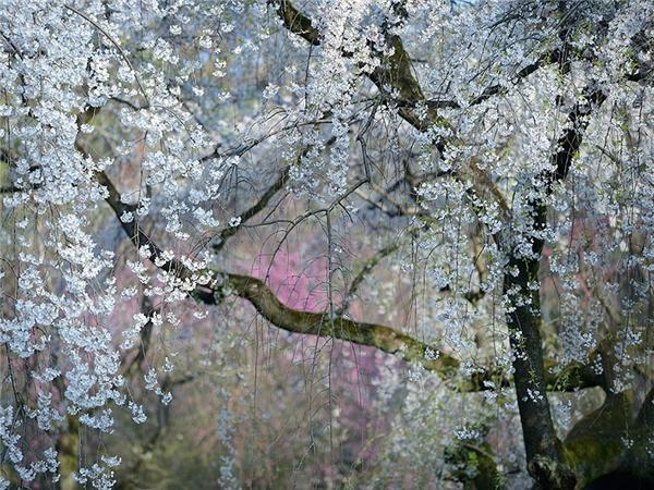 """""""Vườn địa đàng"""" ở Nhật Bản."""