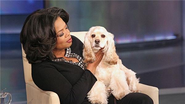 Chú chó này thường xuyên được lên truyền hình cùng chủ nhân. (Ảnh: Internet)