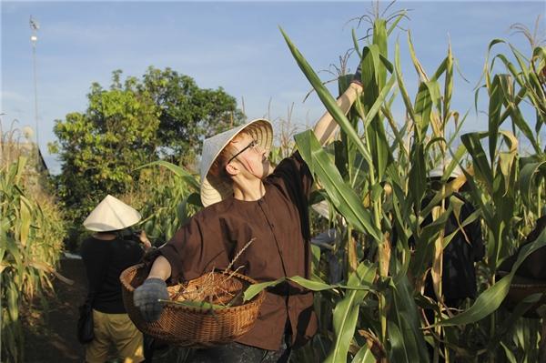 Các thí sinh đã có cơ hội trải nghiệm với cuộc sống của một người nông dân thực thụ khi tiến hành thu hoạch những nông phẩm quen thuộc của làng quê Việt Nam.