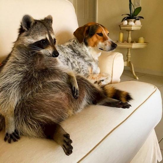Ngồi cũng là một bản năng, và nó đã tiến hóa từ các động vật khác trước khi con người hình thành. Kể cả con người hiện đại, việc đầu tiên sau khi đi đâu hoặc làm việc gì đó là ngồi, và nó xảy ra một cách vô thức. (Ảnh: Diply)