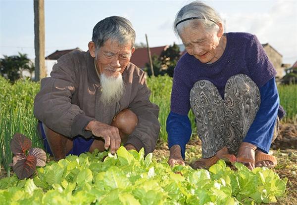 Ông bà gắn bó với nghề trồng rau đã hơn 60 năm nay.(Ảnh: Internet)