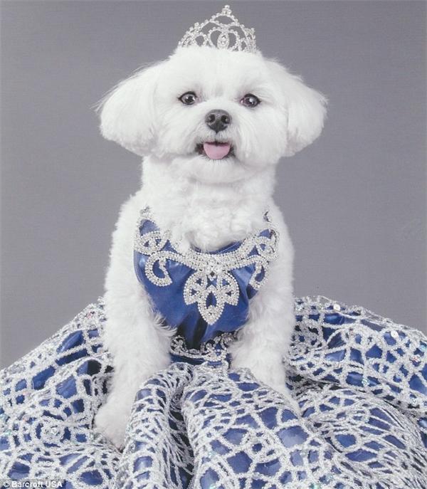 """Bella Mia trong trang phục dành riêng cho """"cô"""". (Ảnh: Internet)"""