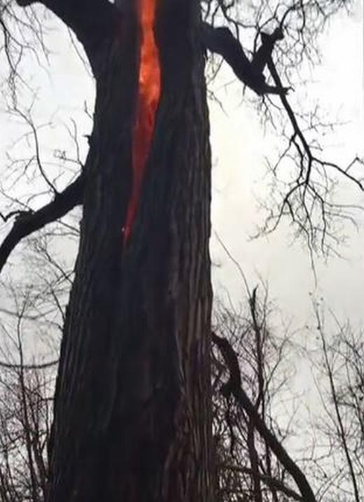 Cây bốc cháy từ trong thân và những giả thiết thực tế lẫn hoang mang