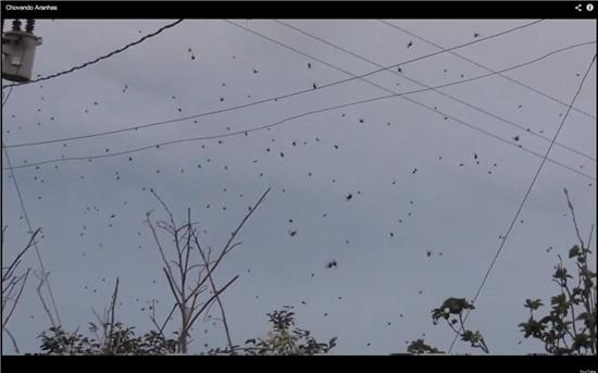Kinh dị với cơn mưa nhện bao phủ bầu trời.