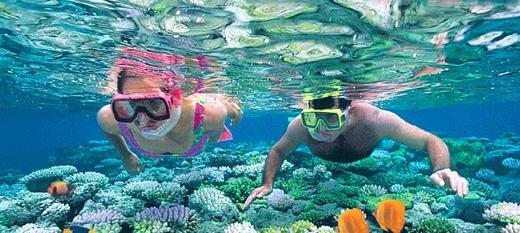 Lặn ngắm san hô là một trong những thú vui không thể bỏ qua khi đến Bình Hưng, vì chỉ khi lặn xuống dưới nước, bạn mới tận mắt chứng kiến được vẻ đẹp rực rỡ của chúng.(Ảnh: Internet)