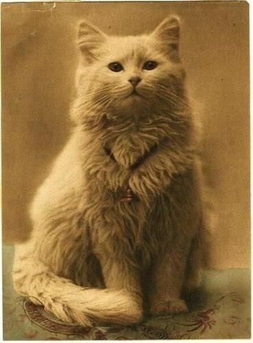 Bức ảnh chân dung mèo được chụp trong thời đại Victoria, được cho là một trong những hình ảnh đầu tiên của được chụp của loài mèo.