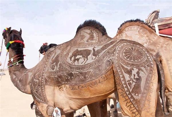 Tác phẩm nghệ thuật trên lông lạc đà đẹp ngoạn mục được thực hiện chỉ bằng một chiếc kéo.