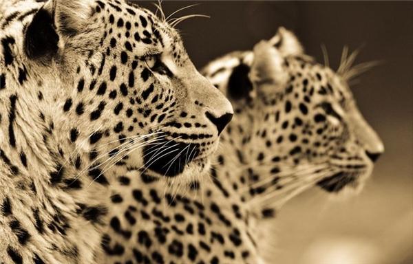 Ông hy vọng người xem sẽ thưởng thức những bức ảnh đầy cảm xúc của mình và chia sẻ chúng, góp phần nâng cao nhận thức về bảo vệ môi trường thiên nhiên, bảo tồn các loài động vật hoang dã, quý hiếm.