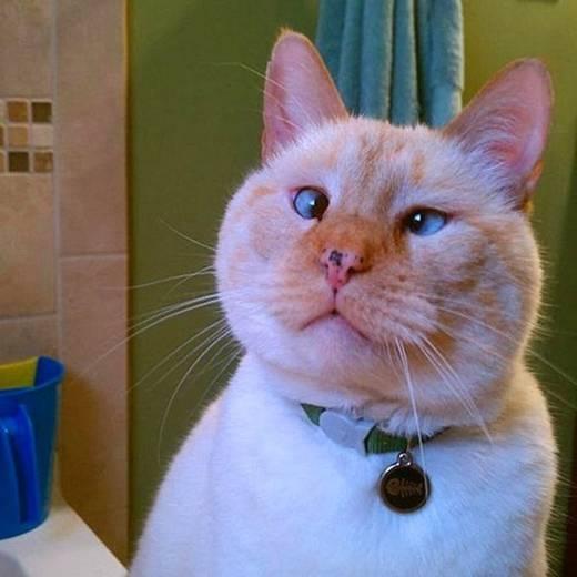 Chán kiểu thè lưỡi trêu chủ, chú mèo này sáng tạo hơn khi làm mặt thộn mắt lác và đã thành công khiến chủ nhân cười không dừng được.